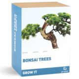 Grow Your Own Bonsai Tree