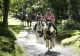 Introduction to Horse Riding for One