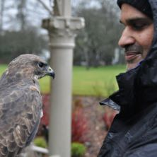 3 Hour Birds of Prey Day - Special Offer