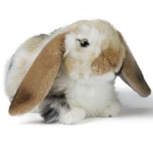 Living Nature Dutch Lop Eared Rabbit Soft Toy - Brown