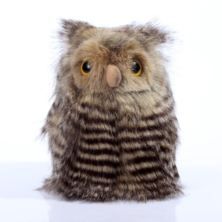 Fluffy the Baby Owl