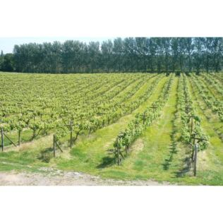 British Vineyard Tour and Tasting with Lunch for Two Product Image