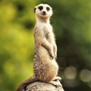 2 for 1 Meet The Meerkats Experience  Product Image