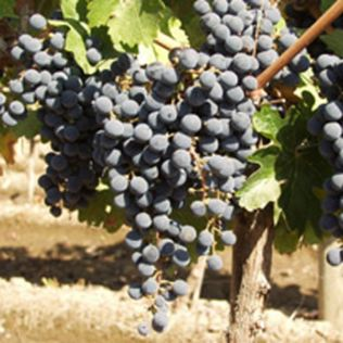 Vineyard Tour and Tasting for Two Product Image