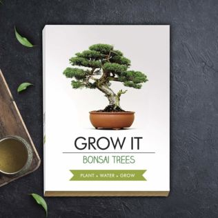 Grow it - Bonsai Tree Product Image