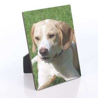 Pet Photo Plaque Product Image