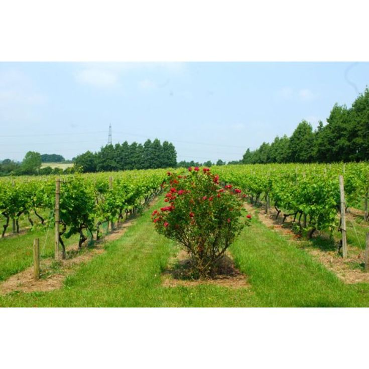 Chilford Hall Vineyard Tour and Tasting with Lunch for Two in Cambridgeshire product image