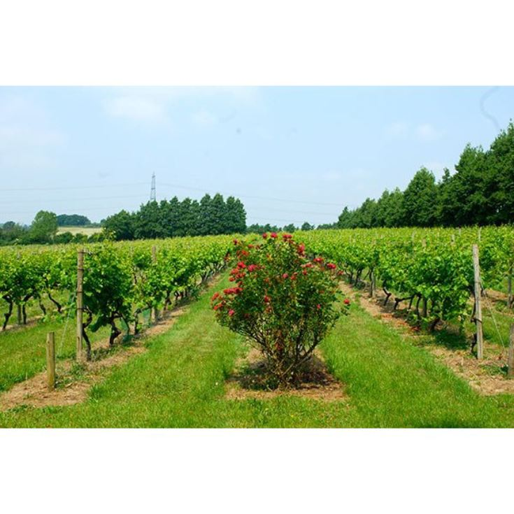 Chilford Hall Vineyard Tour and Tasting with Afternoon Tea for Two product image