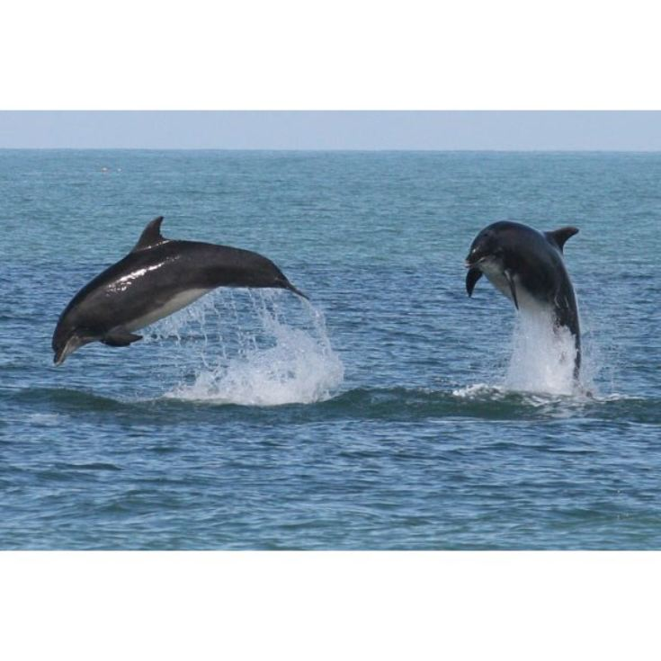 Dolphin Watching for Two product image