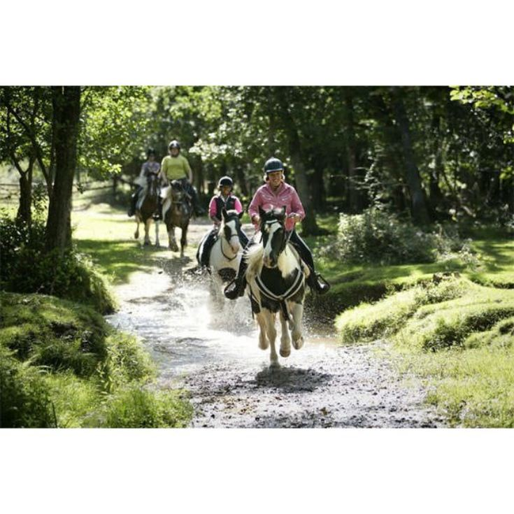 Two Hour New Forest Horse Riding Experience for One product image