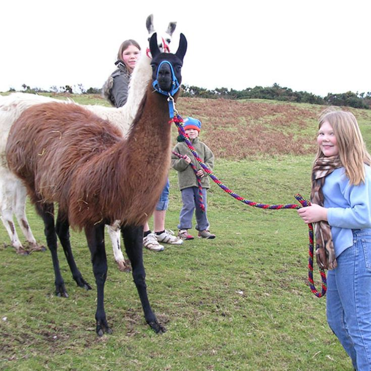 Llama Trekking and Cream Tea for Two product image