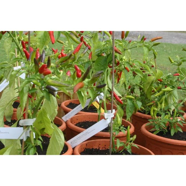Chilli Tour and Tasting for Two product image