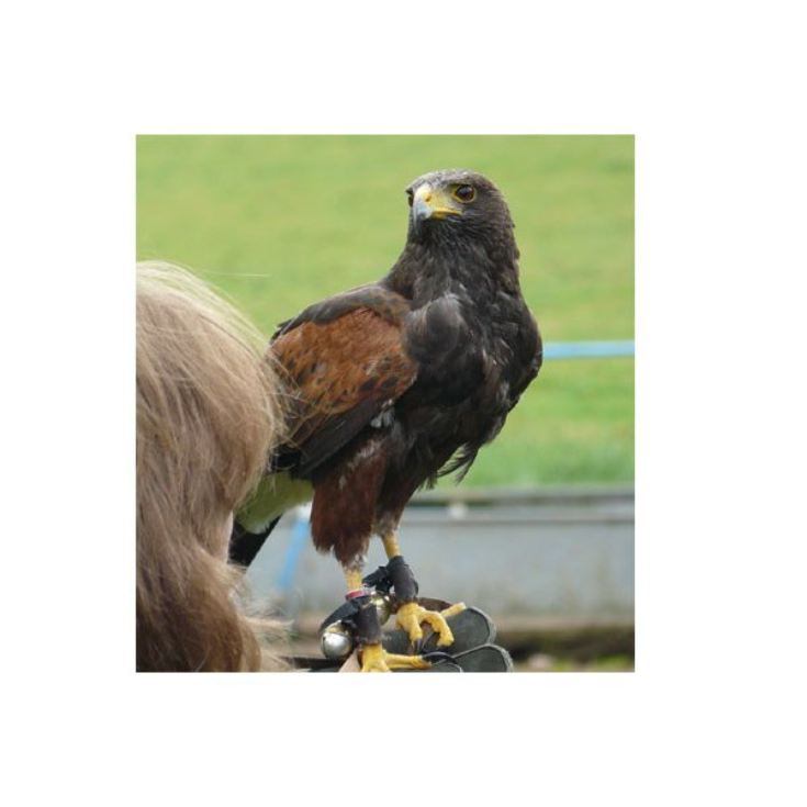 3 Hour Birds of Prey Day - Special Offer product image