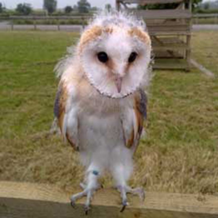 Owl Encounter in Derbyshire product image