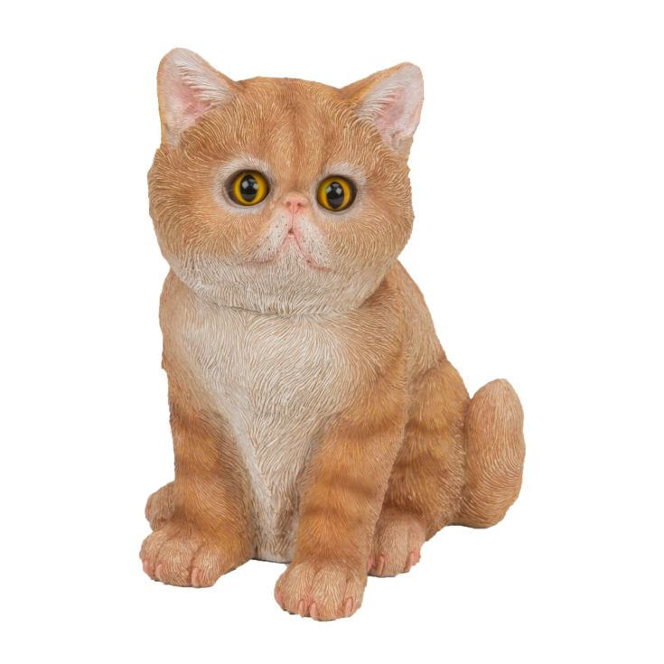 Best of Breed Collection - Ginger Persian Kitten product image