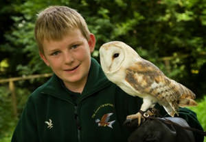 Junior Falconer Experience