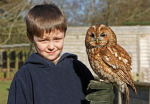 Childrens Owl Experience