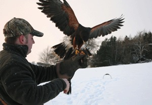 Family Falconry Experience