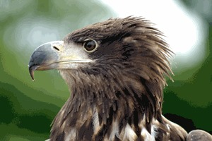 Birds Of Prey Experience In Cheshire