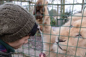 Entry To Paradise Wildlife Park And Feed The White Lions For Two (weekdays)