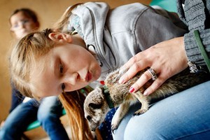 2 for 1 Meerkat Experience for Two at Hoo Farm Animal Kingdom - Meerkat Gifts