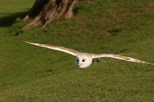 Owl Encounter In Derbyshire