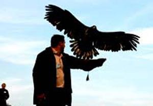 Bird Of Prey Day UK Wide