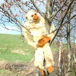 Hanging Gibbon