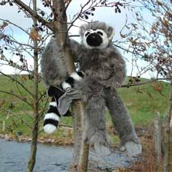 Hanging Lemur
